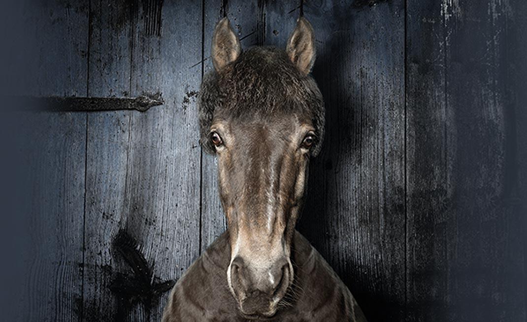 Was ist Cushing? Das Equine Cushing Syndrom (ECS, PPID) ist eine Funktionsstörung der Pars intermedia der Hypophyse beim Pferd - hier finden Sie Informationen rund um das Thema Cushing beim Pferd.